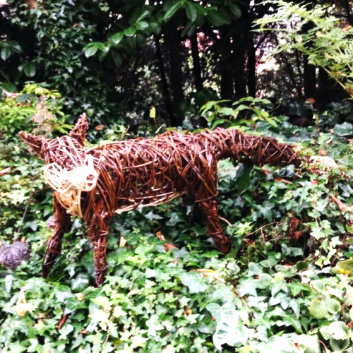 1. FOX